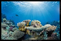 New publication on Coral Reefs and People