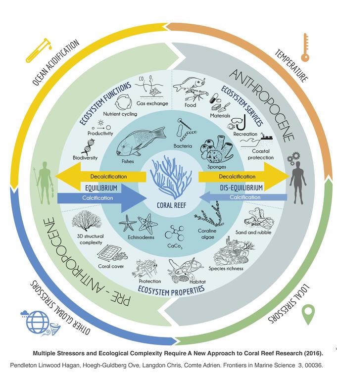 Holistic representation of coral reefs: their constitution, evolution of (im)balances, ecosystem services, environmental pressures, etc.
