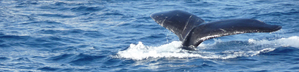 Activities in the Mediterranean like Whale watching are part of the ecosystem services we assess