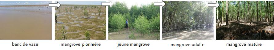 stades mangrove 1.jpg