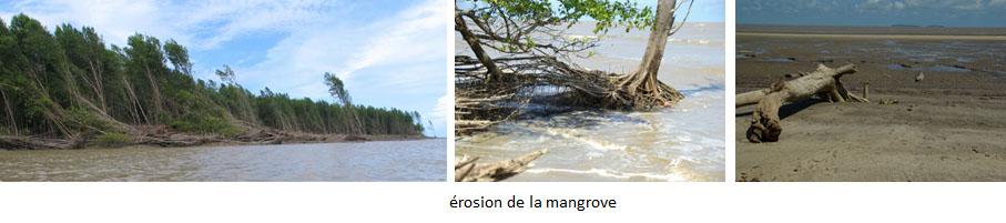 stades mangrove 2.jpg