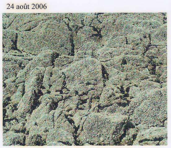 rochers août06.jpg