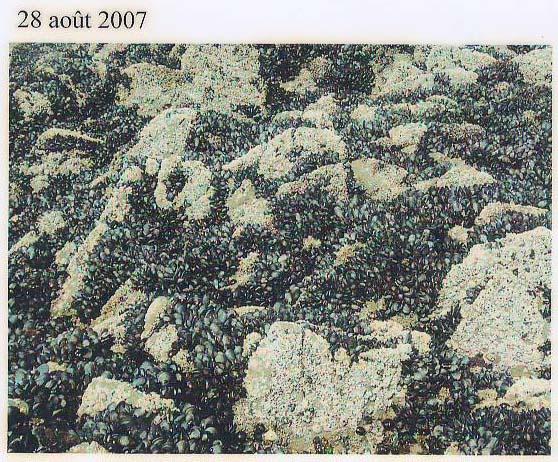 rochers août07.jpg