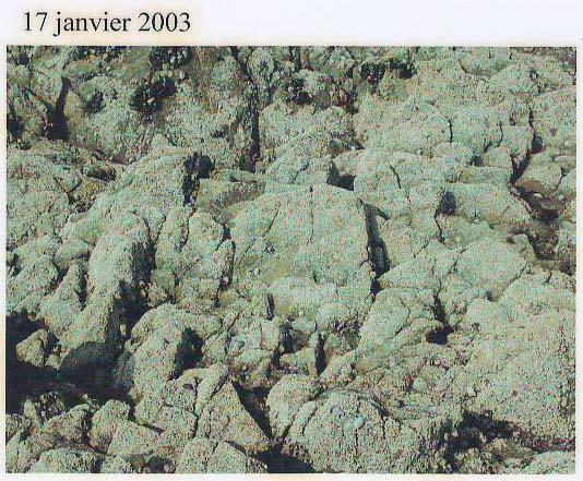 rochers jan03.jpg