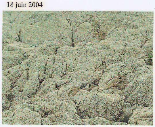 rochers juin04.jpg