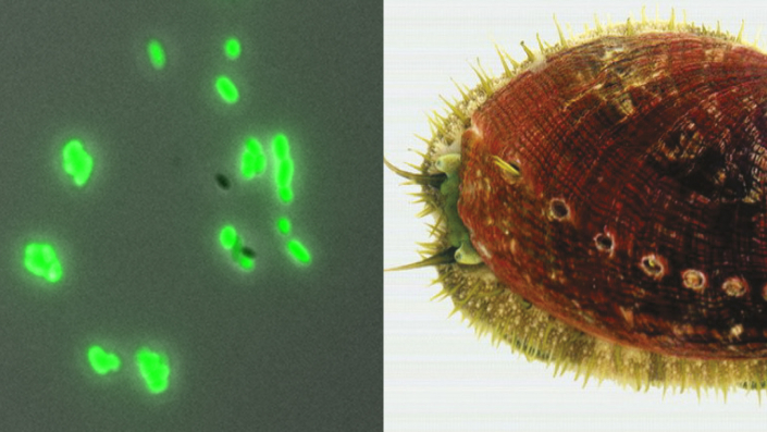 Microhabitats and ecology