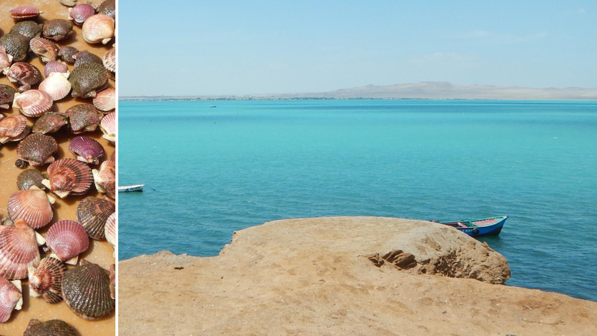 Gauche : Argopecten purpuratus. Droite : La baie de Paracas au Pérou. Ne vous fiez pas aux apparences : ce jour là la température de l'eau est proche de 15°C, la saturation en oxygène proche de 0% et cette belle couleur turquoise est due à la présence d'hydrogène sulfuré, toxique, précipitant sous forme soufre élémentaire