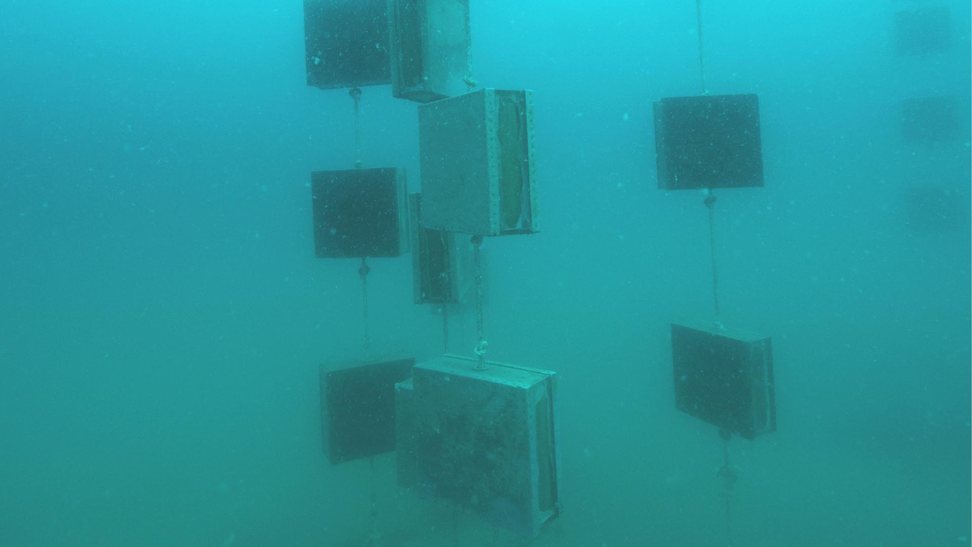 Testing 'ship hulls' at sea (Photo credit: CNRS, scientific diving department, Sorbonne Universités)