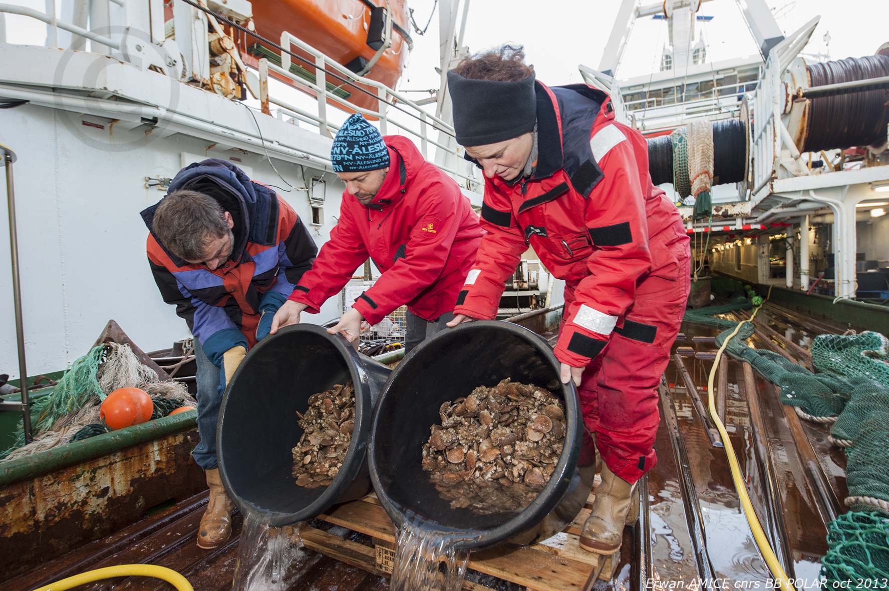 Mission à Kongsfjorden (Spitzberg) - Septembre 2013 - Chlamys fishing