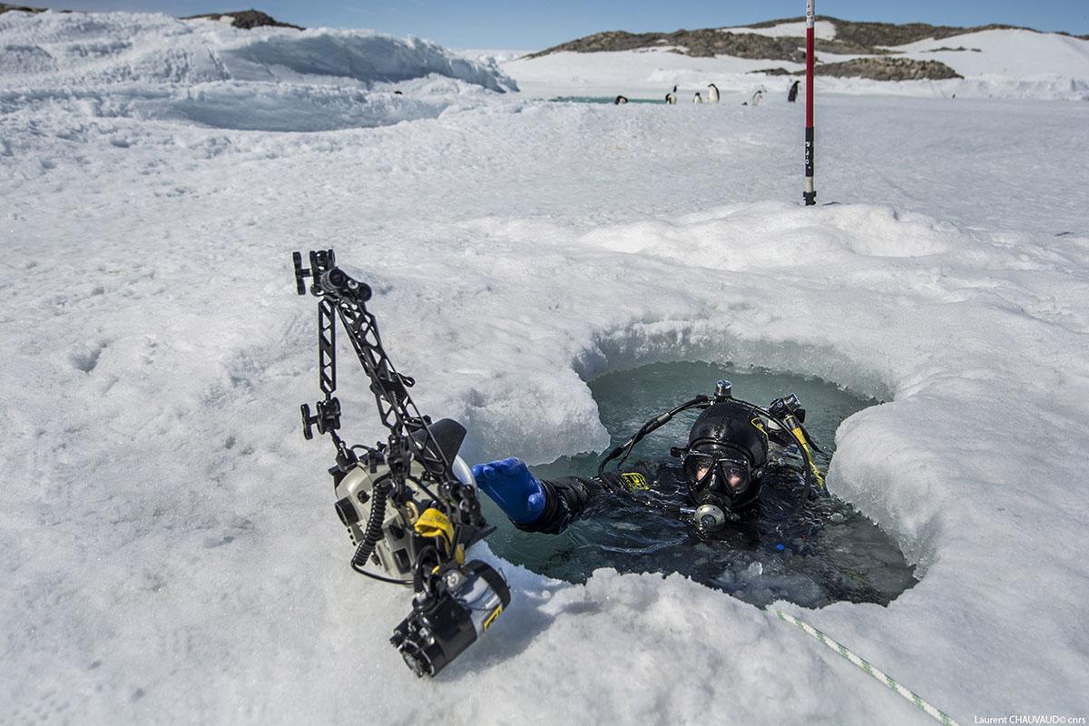 Plongée en Antarctique, base Dumont D'Urville